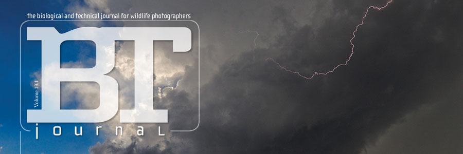 DBTJ Reissue Volume 13.1: Storm Chasin'
