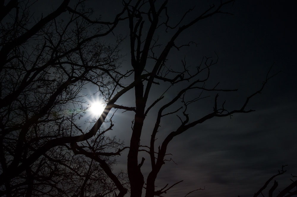 Night of the Bloodmoon